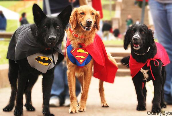 Heroic Pet Stories
