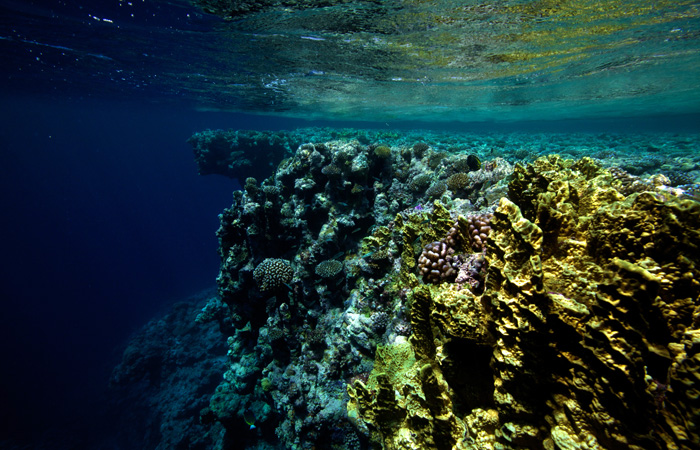 Photo of 3 Best Wall Reefs for Diving in the World