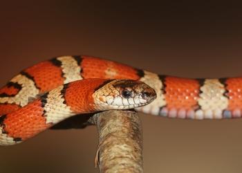 snake-deadlies-8