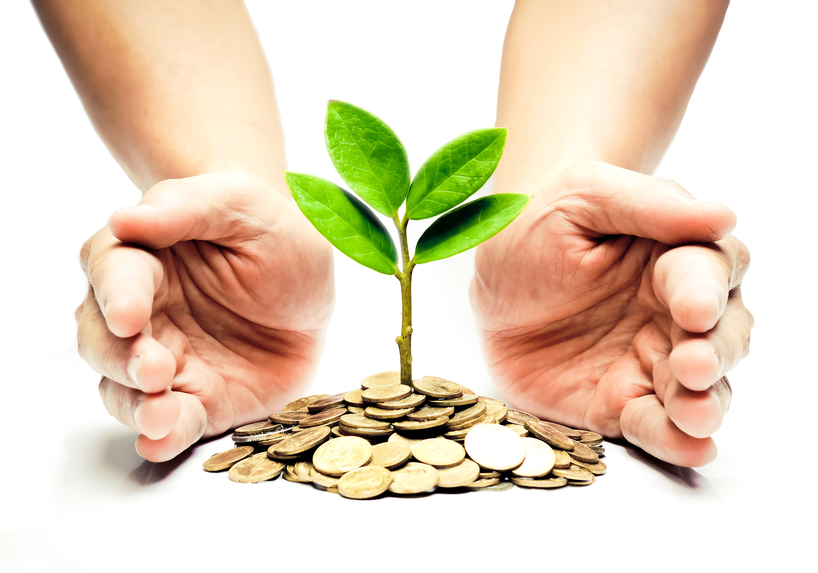 Palms With A Tree Growing From Pile Of Coins Hands Holding On Csr Green Business Ethics Good Governance