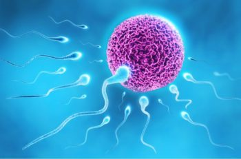 increase sperm count