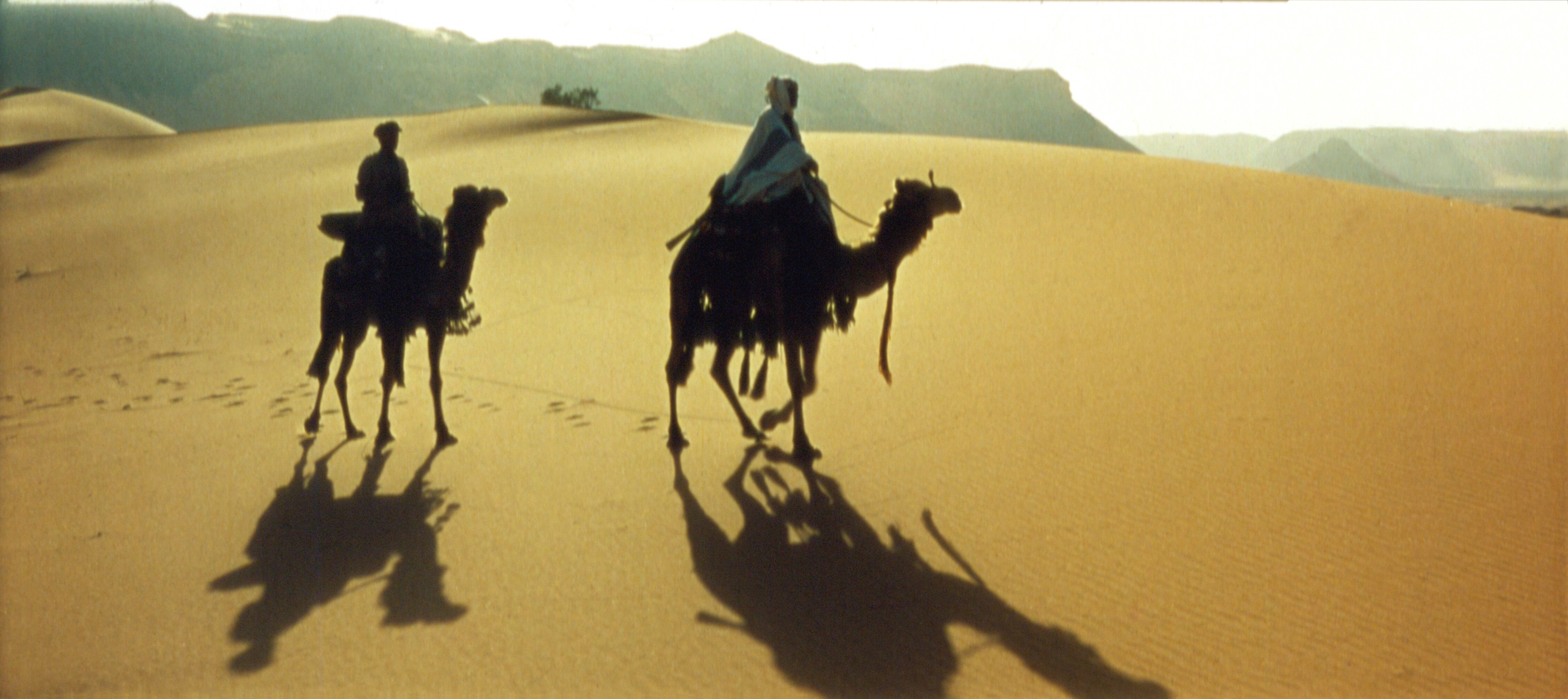 vised-lawrence-of-arabia-wide-screen-camels