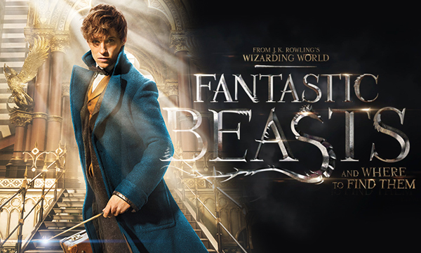 Photo of 4 Harry Potter Characters Who Could Appear In Fantastic Beasts