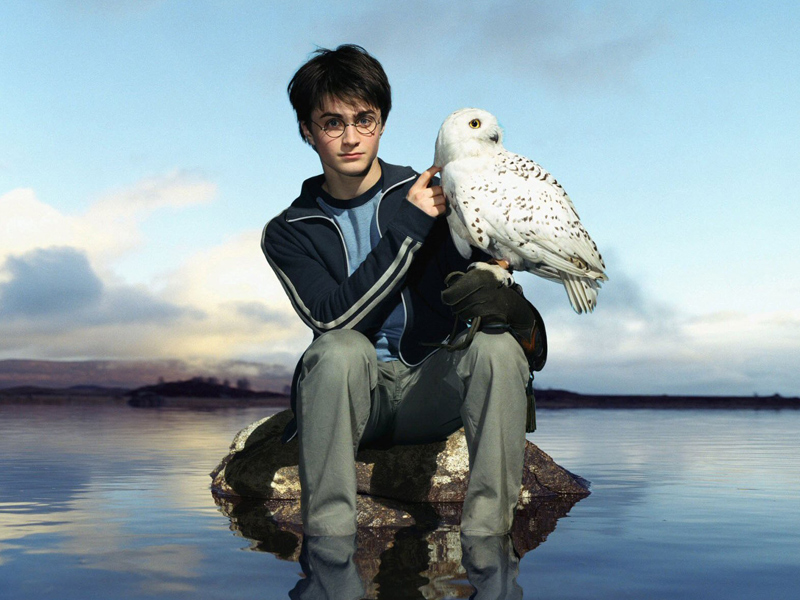Photo of 5 Incredible 'Master-Pet' Relationships In Harry Potter Franchise