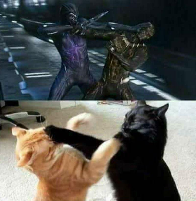 Funny Cat Videos Cat On Fan