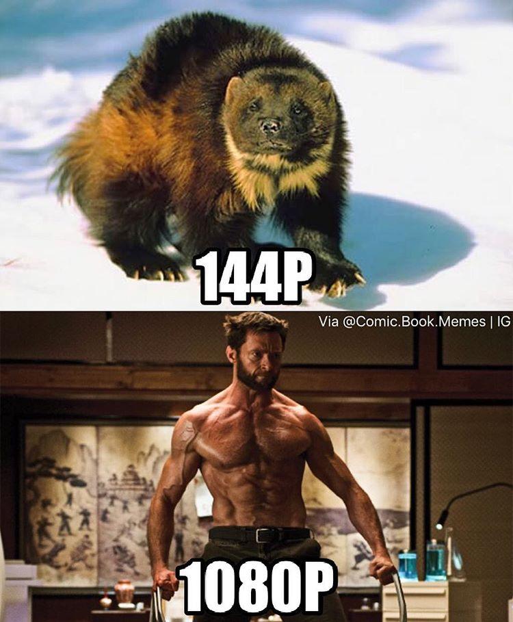29 Funniest Wolverine ...