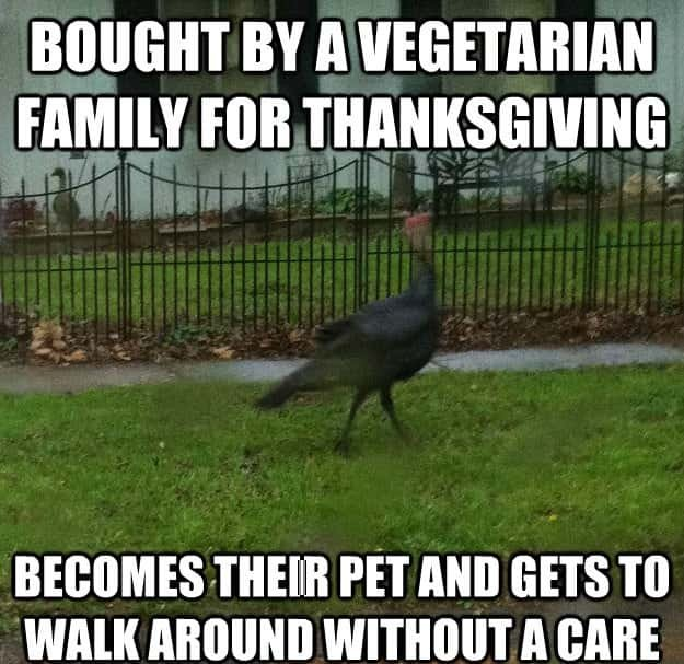 25 Hilarious Happy Thanksgiving Funny Memes That Will ...