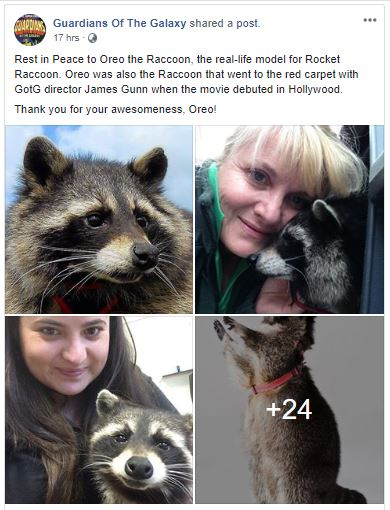 Guardians of the Galaxy Rocket Raccoon Oreo