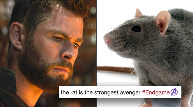 Photo of Avengers: Endgame – The Rat Who Saved the Universe Was a Real Trained Animal
