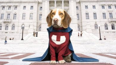 Photo of Underdog Tamil Dubbed Movie Download in 720p HD For Free