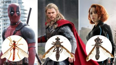 Photo of Newly Discovered Fly Species Have Been Named After Several Marvel Characters