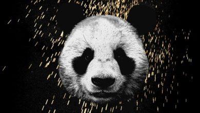 panda song download mp4